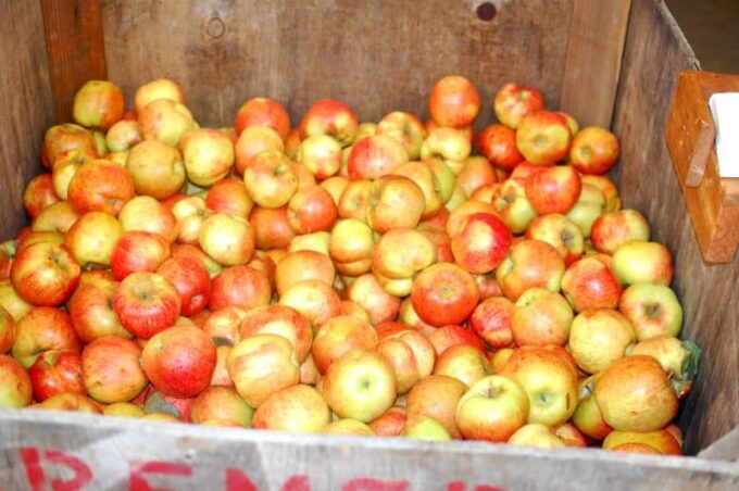 bin full of apples | joeshealthymeals.com