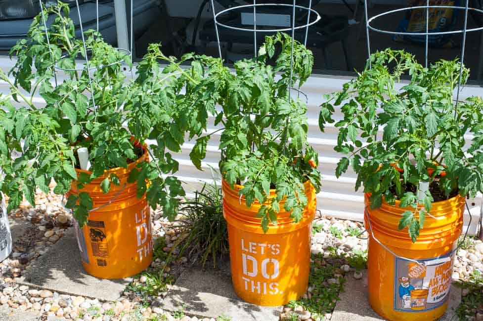 5 gallon self watering planter. Tomato plants are loving this. | joeshealthymeals.com